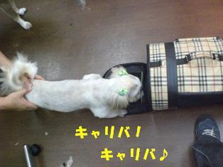 CIMG8101.jpg