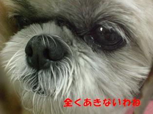 CIMG8200.jpg