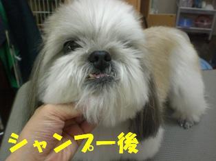 CIMG8249.jpg
