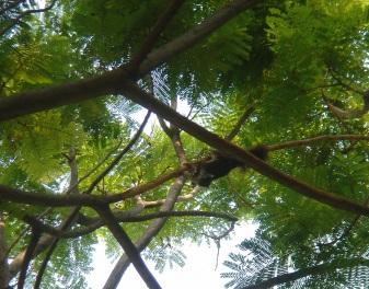 リスと小枝3