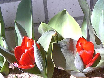 20060416150429.jpg