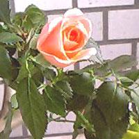 20060418162415.jpg