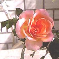 20060418162506.jpg