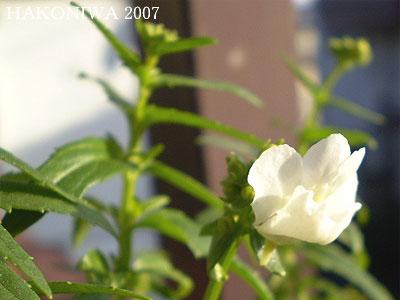 20070121181113.jpg