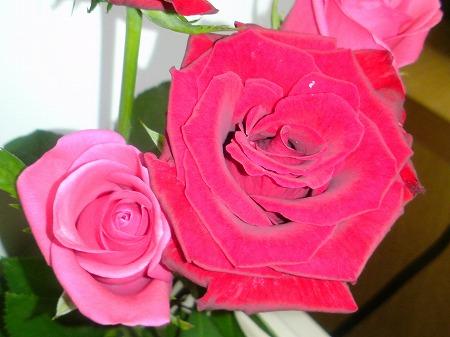 バラのお土産2