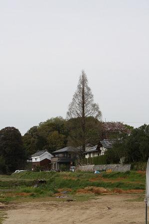 山の辺の道4
