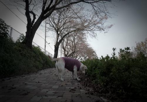 20081118sike1.jpg