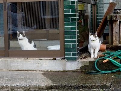 猫が2匹♪