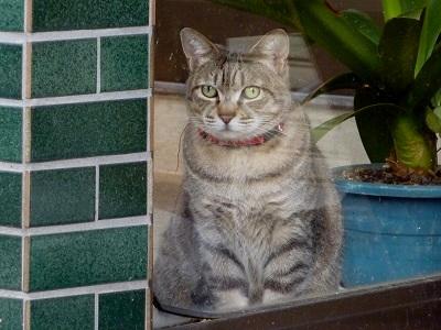 ぽっちゃり猫