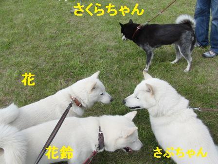 7.24さくらちゃん&さぶちゃん