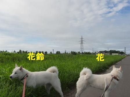 7.24散歩