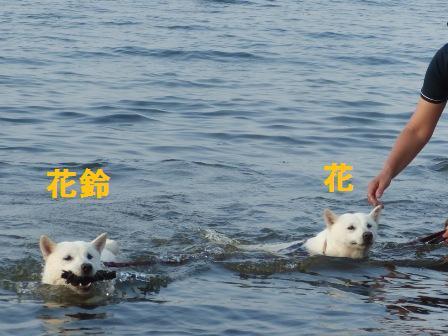 8.28湖水浴3