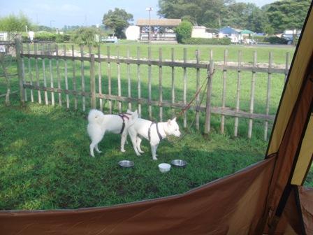 8.28キャンプ場の朝1