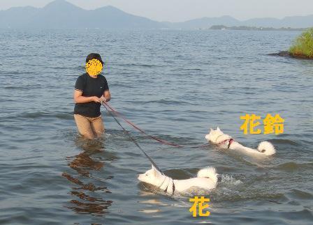 8.28湖水浴1