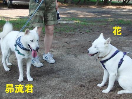 8.28琵琶湖で遊ぼう会4