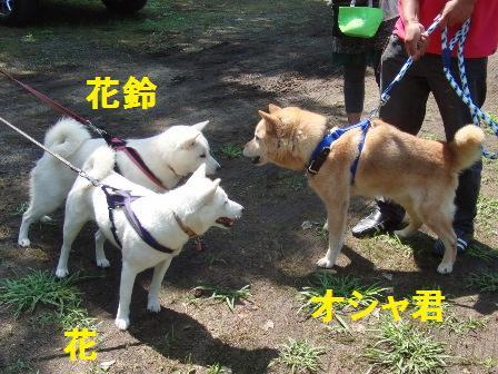 8.28琵琶湖で遊ぼう会3
