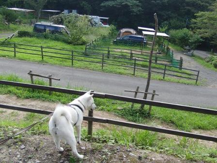 8.30(31)犬山キャンプ場a