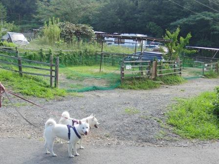 8.30(31)犬山キャンプ場c