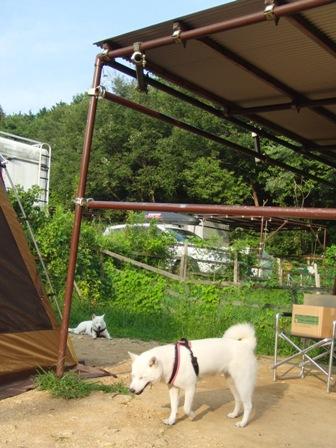 8.30犬山キャンプ場3
