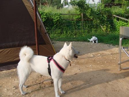 8.30犬山キャンプ場1