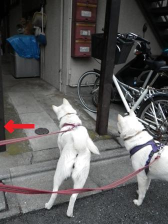 2012.2.26ネコちゃんは?