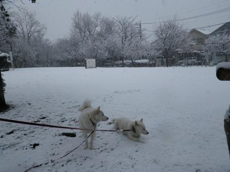 2012.2.29みんなまっ白