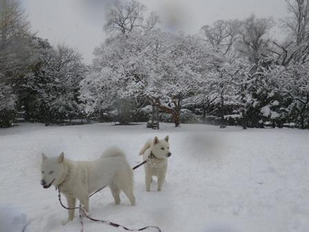2012.2.29降り続く雪
