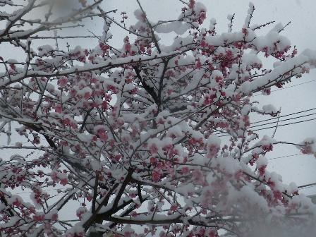 2012.2.29梅の花が…