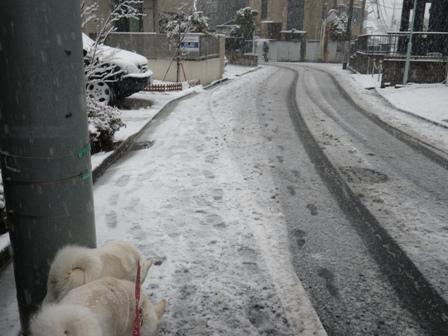 2012.2.29道路の雪