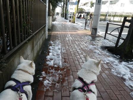 2012.3.1 歩道は…