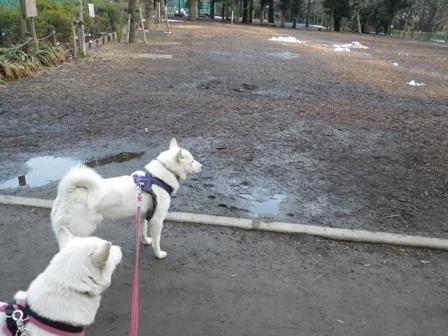 2012.3.1 午後の公園2