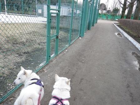 2012.3.1 午後の公園1