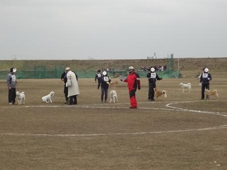 2012.3.4 花鈴・比較審査1
