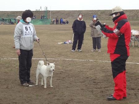 2012.3.4 花・個体審査1