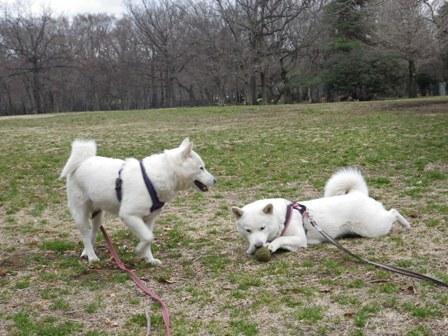 2012.3.19 野川公園