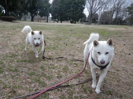 2012.3.19 野川公園・さあ歩こう!