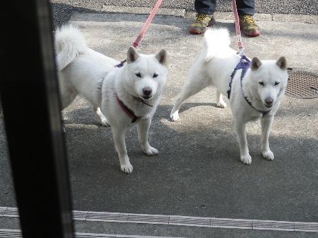 2012.3.20 お墓参り2