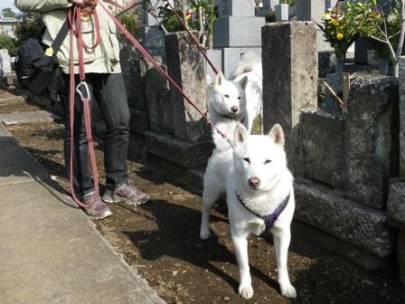 2012.3.20 お墓参り1