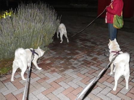 2012.3.24 風ちゃんと散歩