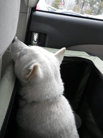 2012.3.31 浜名湖SA・車中にて・花