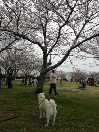 2012.3.31 浜名湖SA4