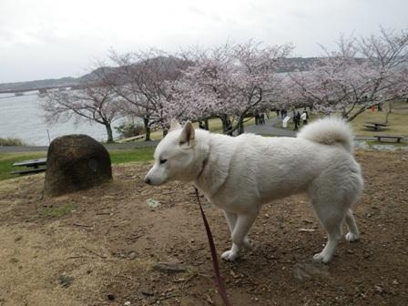 2012.3.31 浜名湖SA2