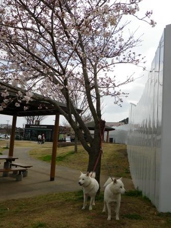 2012.4.2 富士川SA2