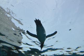 ペンギンが空を飛ぶ