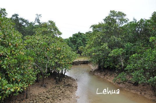 川満マングローブ林