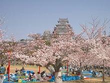 s-Castle_Himeji_sakura02.jpg