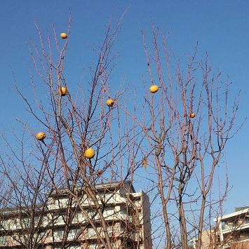 奇妙な実のなる木