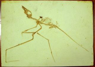 ランフォリンクスの化石のレプリカ