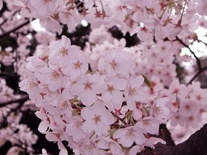 Flower-003_convert_20080328235846.jpg