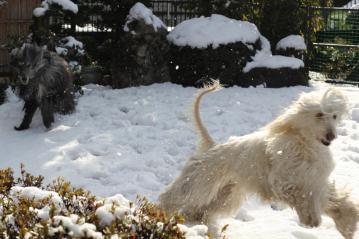 SnowGarden2011Fev2